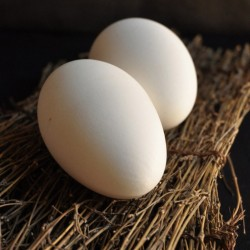 Günlük Kaz Yumurtası 1 Adet