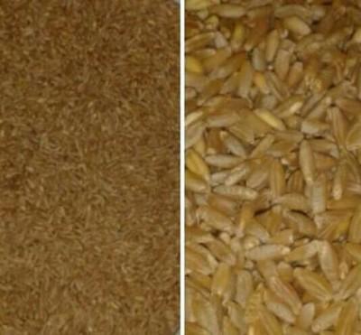 Sarı Buğday (tohumluk) 1 Kg