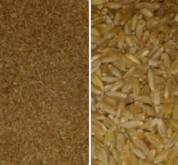 Sarı Buğday (keşkeklik,aşurelik) 1 Kg