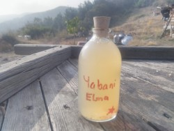 Yabani Elma Sirkesi (100ml)