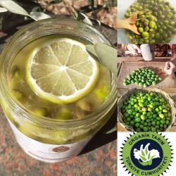 Organik Yeşil Kırma Zeytin 660 Cc Kavanoz
