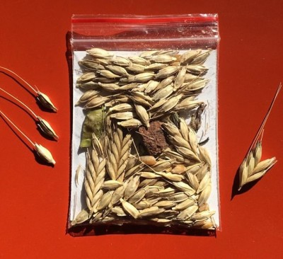 Kabuğundan Çıkarılmış Siyez Buğdayı/1Kg