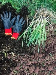 Sürdürülebilir Yaşam Permakültüre Giriş-orman6 Online Eğitim