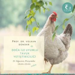 Doğa İle Uyumlu Tavuk Yetiştiriciliği