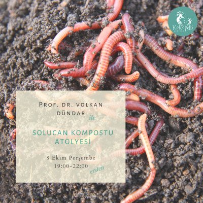 Solucan Kompostu