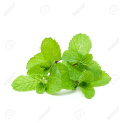 Organik Aromatik Nane 1 Demet