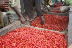 Burundi, Gihere Natural