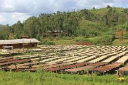 Burundi, Yandaro