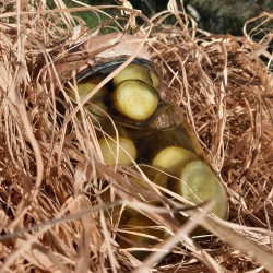 Organik Salatalık Turşusu