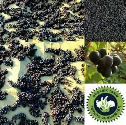 Organik Üzüm Kurusu (kara Üzüm) 250 Gr