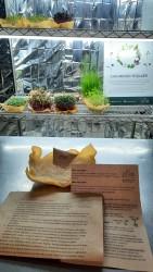 Mikro Yeşil Yetiştirme Seti - Kenevir Lifinde, Topraksız