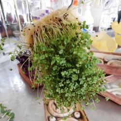 Mikro Yeşil Yetiştirme Seti Mini - Kenevir Lifi Tohum