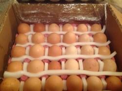 1 Koli - 30 Adet Yumurta