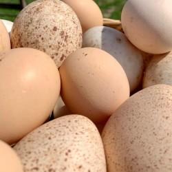 Ördek Yumurtası 10'lu