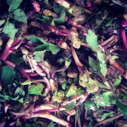 Organik Hodan - Kaldirik Veya Çiçekli Mancar 0.5kg